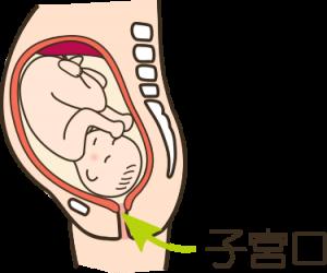 出産が始める徴候4、子宮口が開く