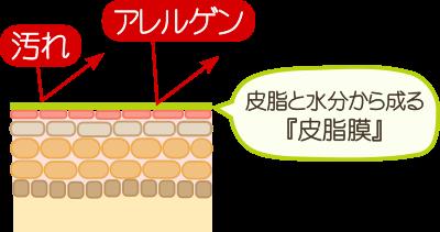 皮脂膜の働き