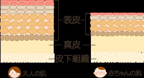 大人と赤ちゃんの肌の違い